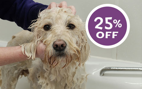 25% Off All Grooms