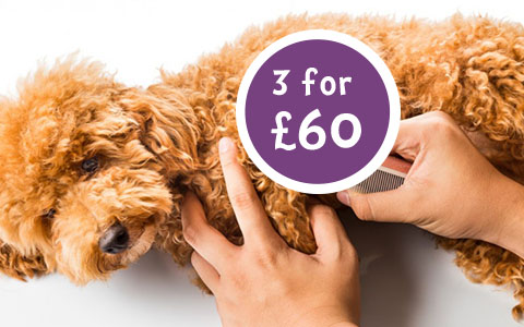 3 puppy grooms for £60